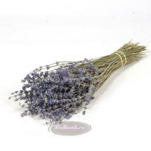 /images/stories/virtuemart/product/lavanda_0